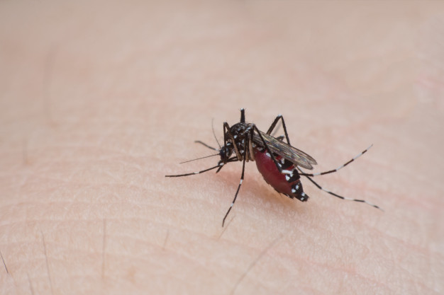 mosquito sugando o sangue da pele humana close up 9635 710